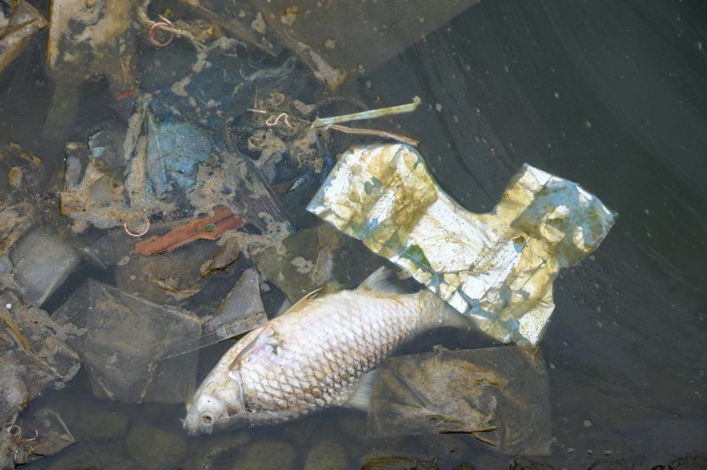sampah sebagai sumber penyakit